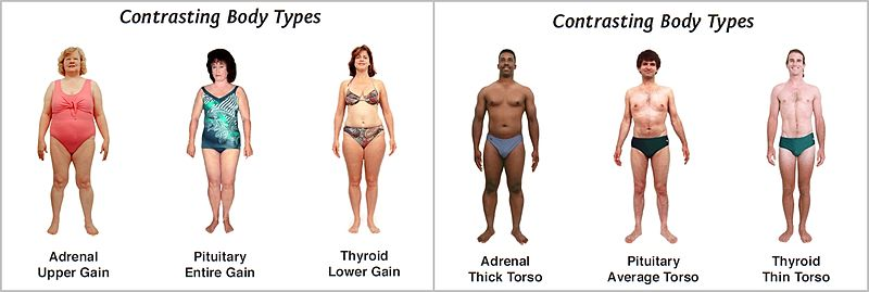 Understanding your body type